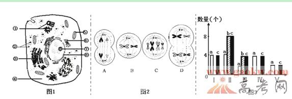 广东汕头金山中学2014高三上开学摸底考试生物试题答案